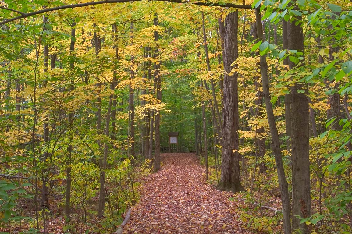 Wilson Trail in Sapsucker Woods Sanctuary. Ithaca, New York