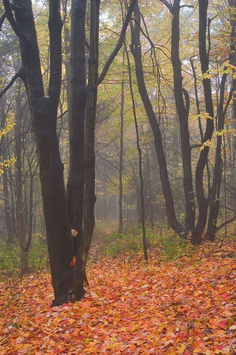 Finger Lakes Trail near crossing with Black Oak Rd. in fog. Catharine, New York