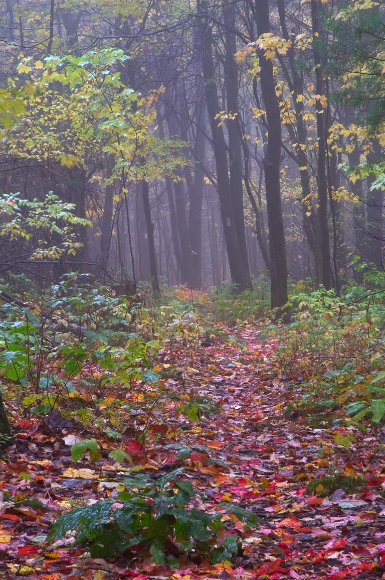 Finger Lakes Trail near crossing with Black Oak Rd. in mist. Catharine, New York