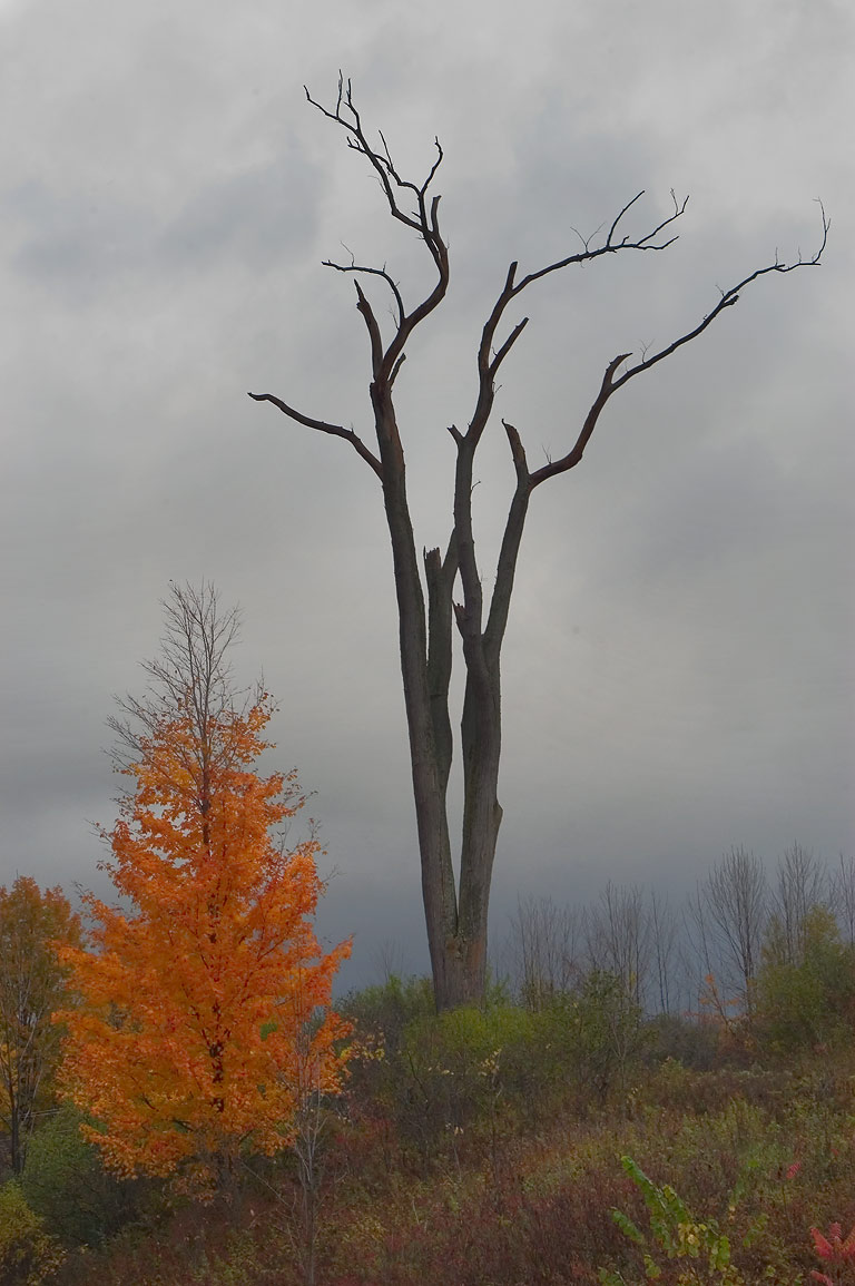 Trees near Rd. 38 in Moravia. Locke, New York