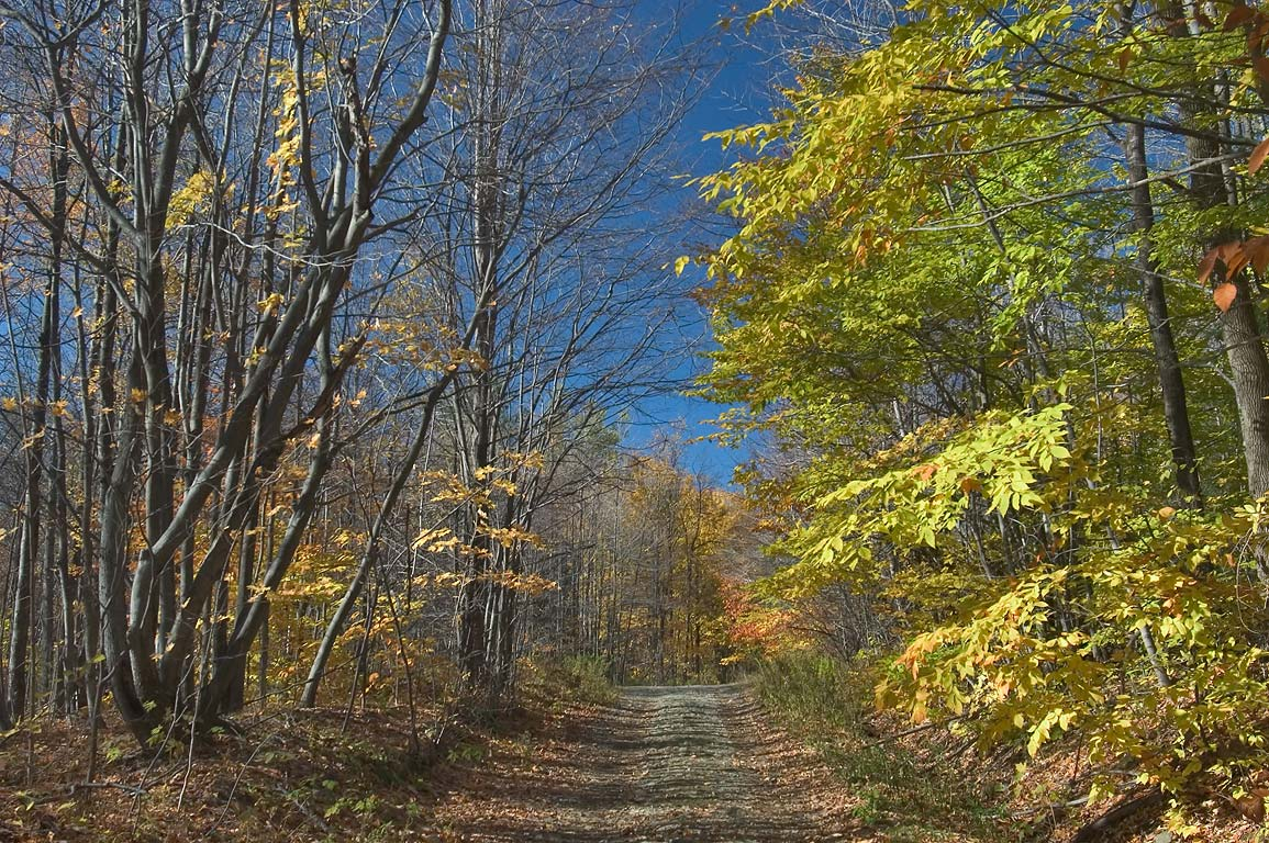 Valentine Hill Rd. in area of Virgil Mountain. Dryden, New York
