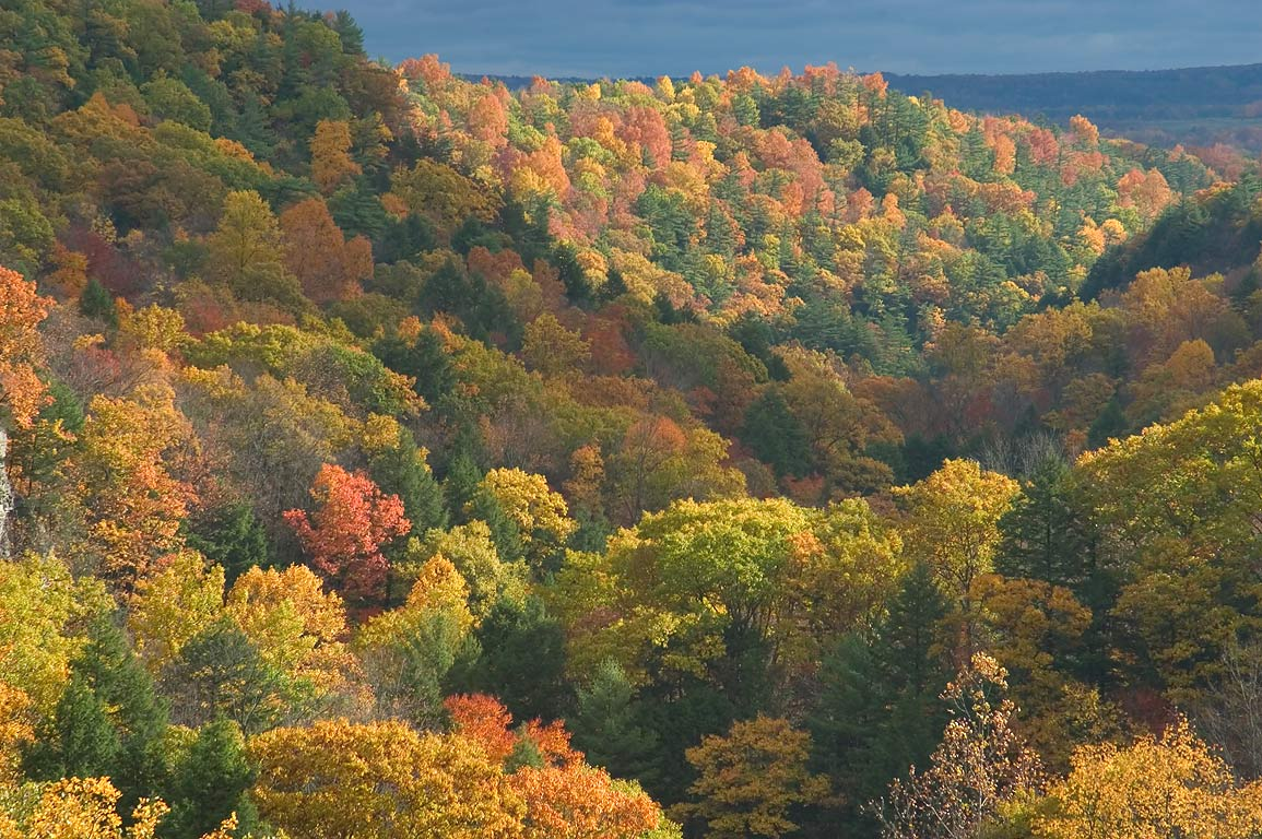 Fall colors of Enfield gorge, view from Rim Trail...H. Treman State Park. Ithaca, New York