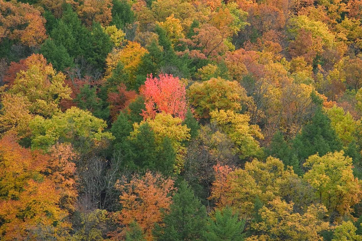 Fall colors of Enfield gorge, zoomed, view from...H. Treman State Park. Ithaca, New York
