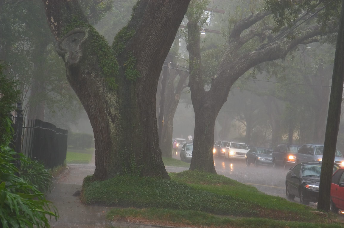 Calhoun St. near Cromwell Place with live oaks in...at rain. New Orleans, Louisiana