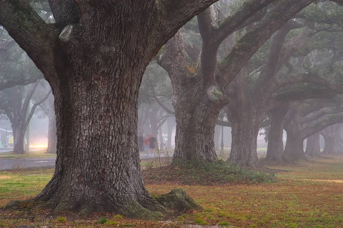 Jogging path along Magazine St. in Audubon Park in fog. New Orleans, Louisiana