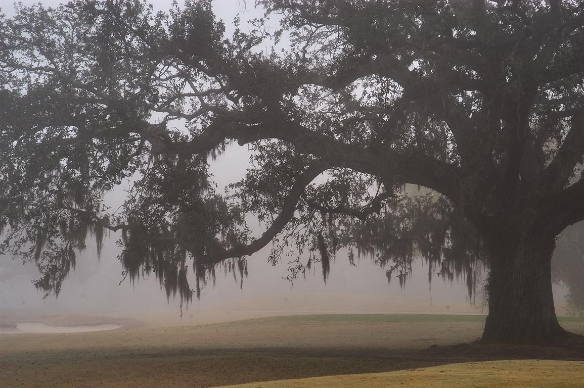 Live oak in golf course of Audubon Park in fog...from West Ave.. New Orleans, Louisiana