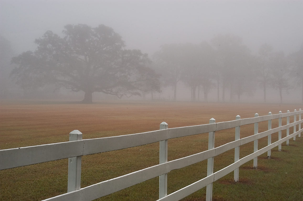 A fence of Oak Alley Plantation in fog, view from...near the entrance. Vacherie, Louisiana