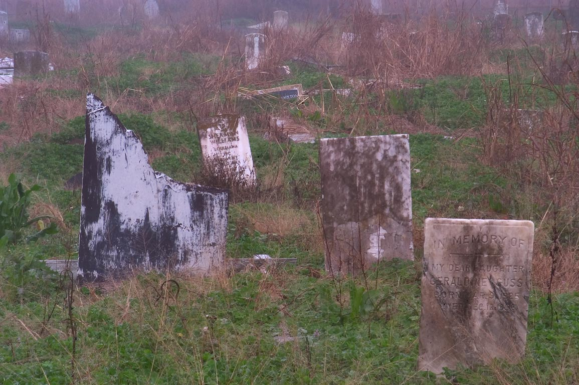 Overgrown headstones in Holt Cemetery in fog. New Orleans, Louisiana