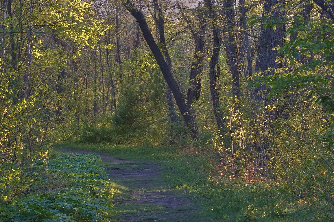 A path in Delaware and Raritan Canal State Park...Rd. bridge. Princeton, New Jersey