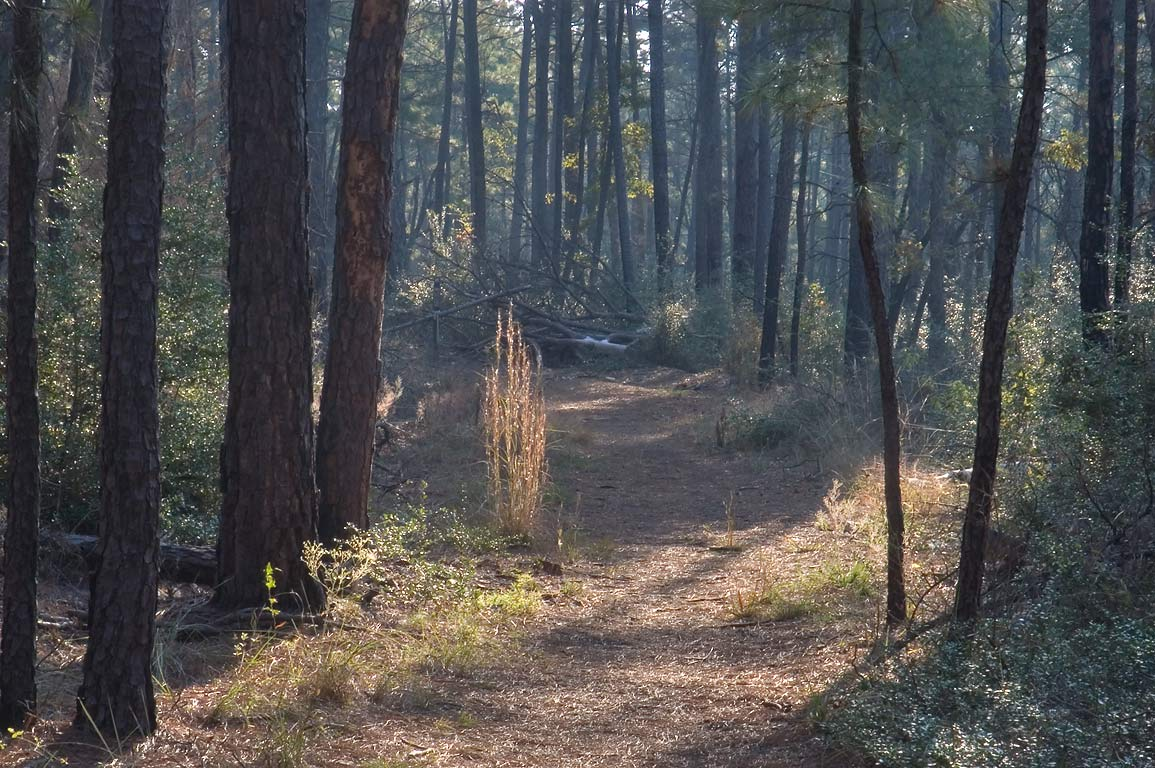Lost Pines Trail in Bastrop State Park. Bastrop, Texas