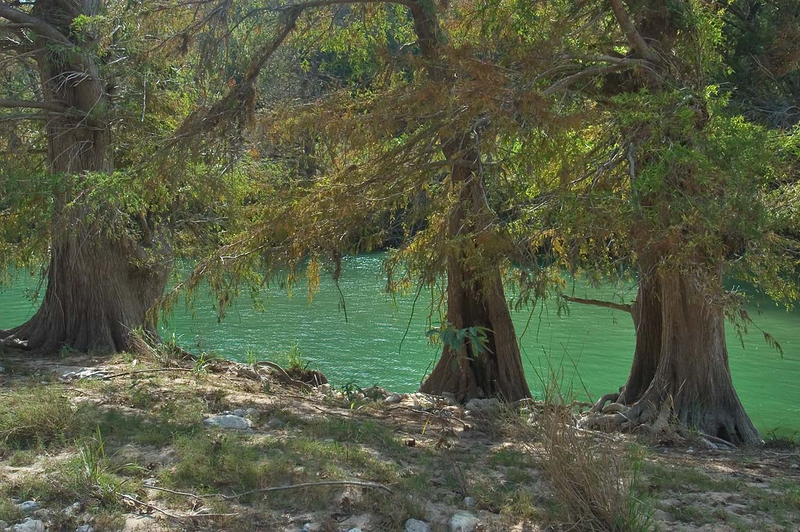 Cypresses east from Trammel Crossing in Pedernales Falls State Park. Johnson City, Texas