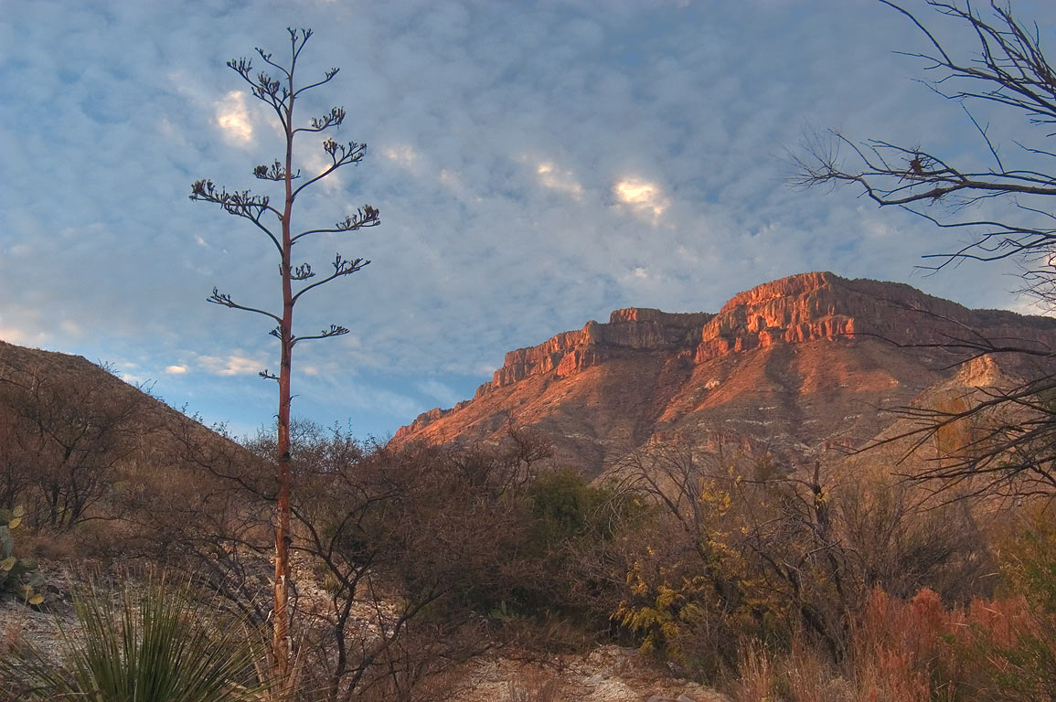 South Rim, view from Fresno Circle campsite near...Trail. Big Bend National Park, Texas