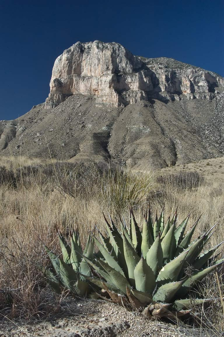 Agaves and El Capitan Mountain from a trail in Guadalupe Mountains National Park. Texas