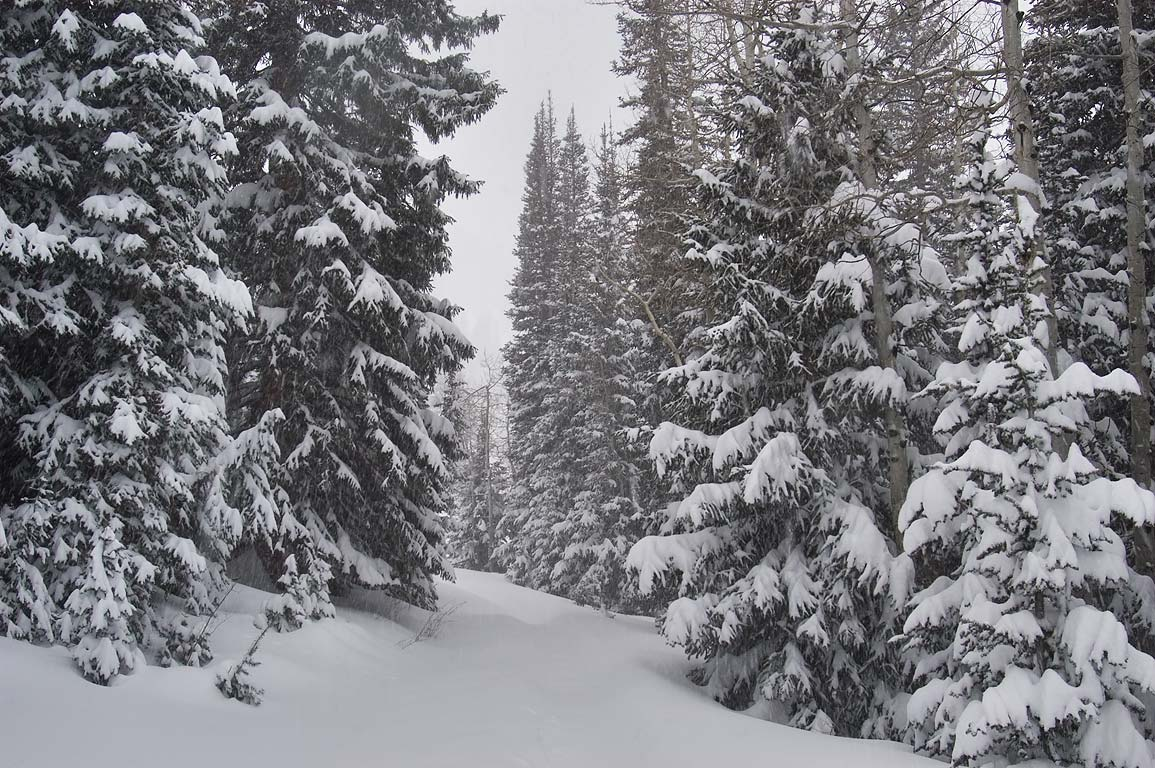 Wasatch National Forest in snow in Snowbird Ski Area. Utah