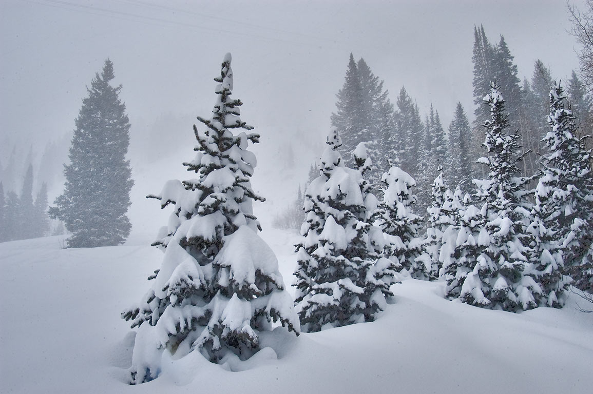 Wasatch National Forest in snow near Harper's Ferry Road in Snowbird Ski Area. Utah
