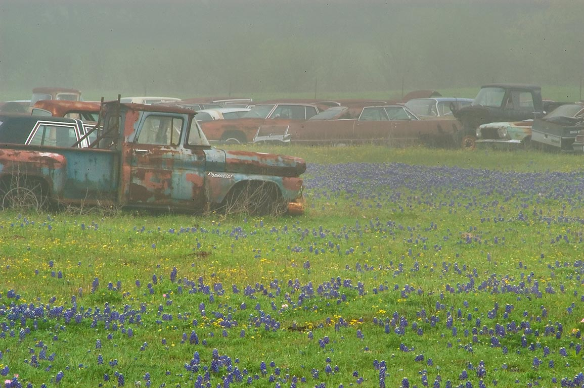 Junkyard in bluebonnet flowers, view from Airport Rd.. North from Brenham, Texas