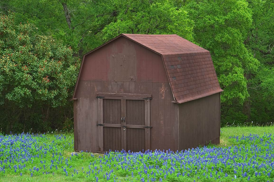 Brown barn and bluebonnet at Clarinn St., near West Hilltop St.. East from Brenham, Texas
