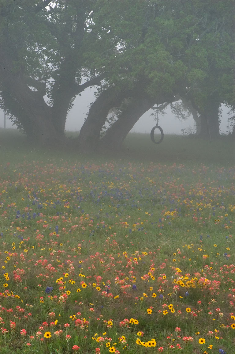 Flowers in Old Baylor Park at morning in mist. Independence, Texas