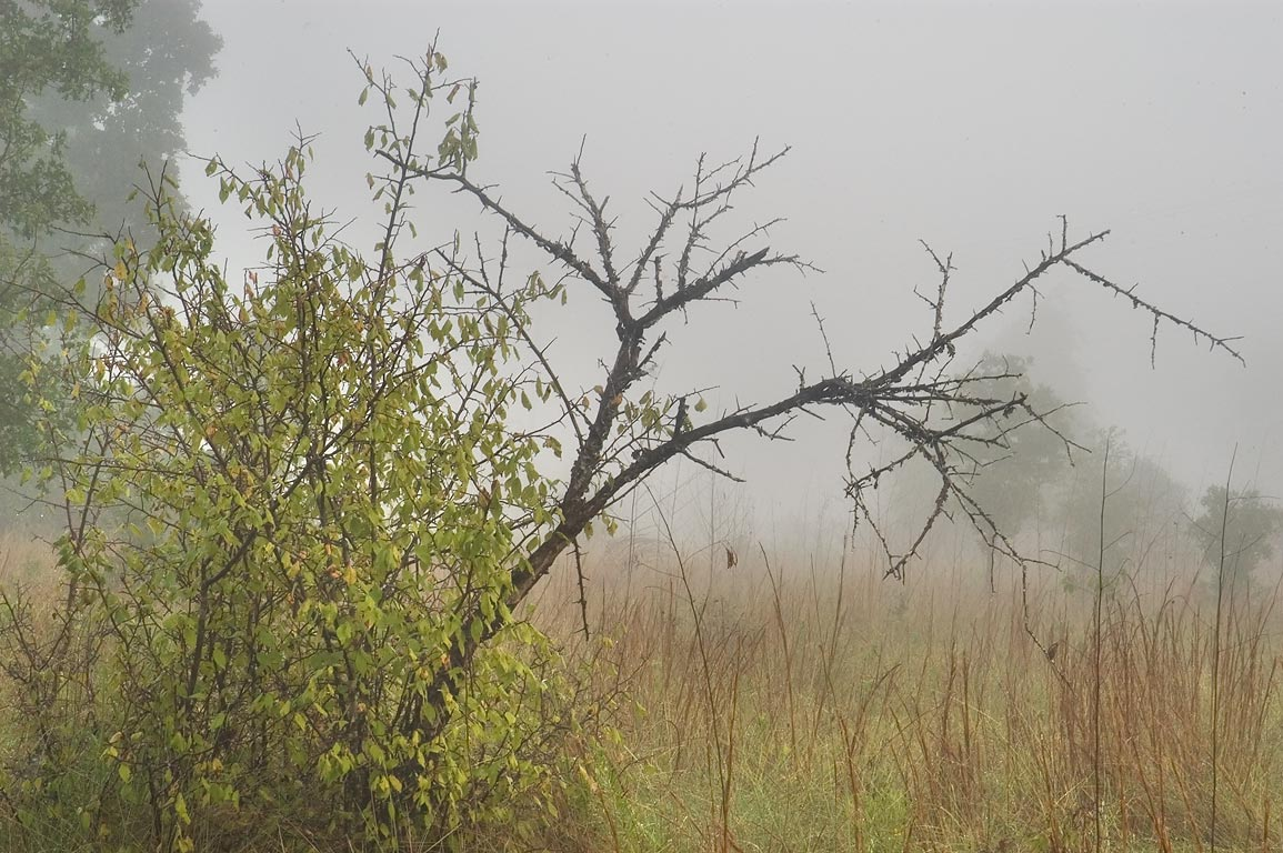 Post Oak Trail in fog in Lick Creek Park. College Station, Texas