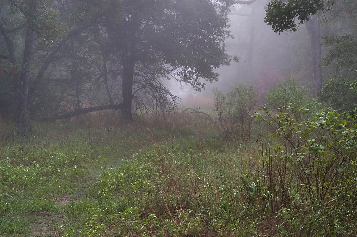 Sewage line right of way in fog in Lick Creek Park. College Station, Texas