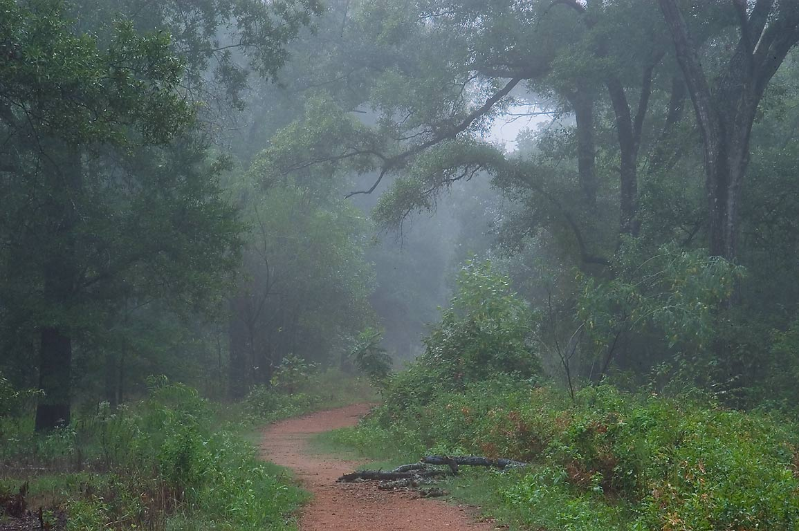 Foggy forest around Deer Run Trail in Lick Creek Park. College Station, Texas