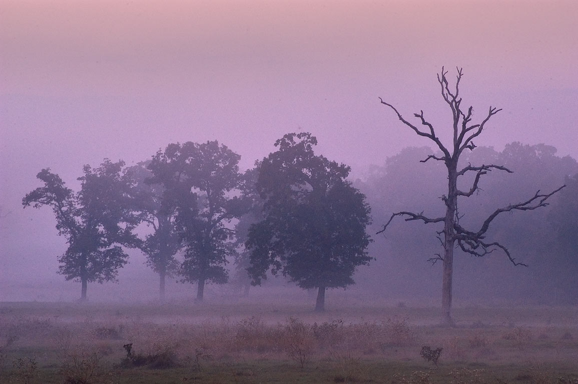 Fog on Bushman's Ranch at morning, view from Rd. 30, east from Shiro. Texas
