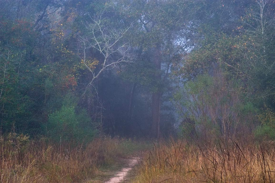 Mist on Iron Bridge Trail in Lick Creek Park. College Station, Texas