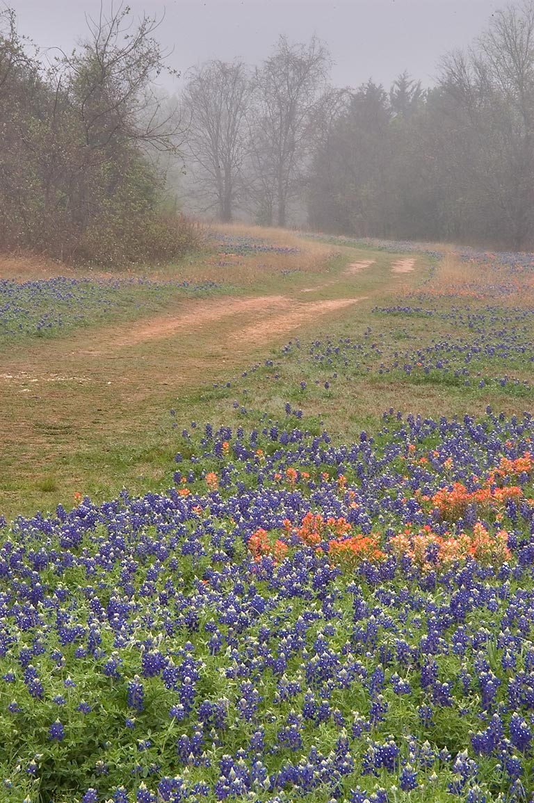 Wildflowers in mist at Old Washington Town Site...State Historic Site. Washington, Texas