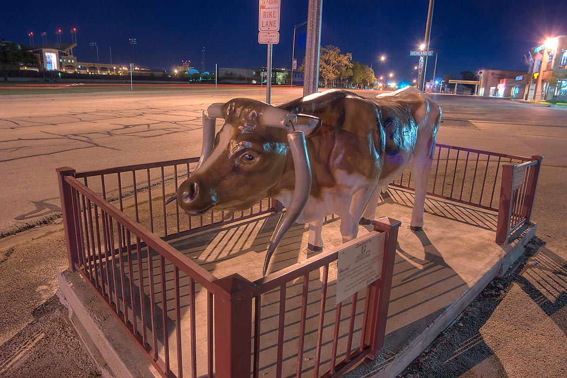Statue of Bevo with sawed-off horns (t.u. mascot...M University. College Station, Texas