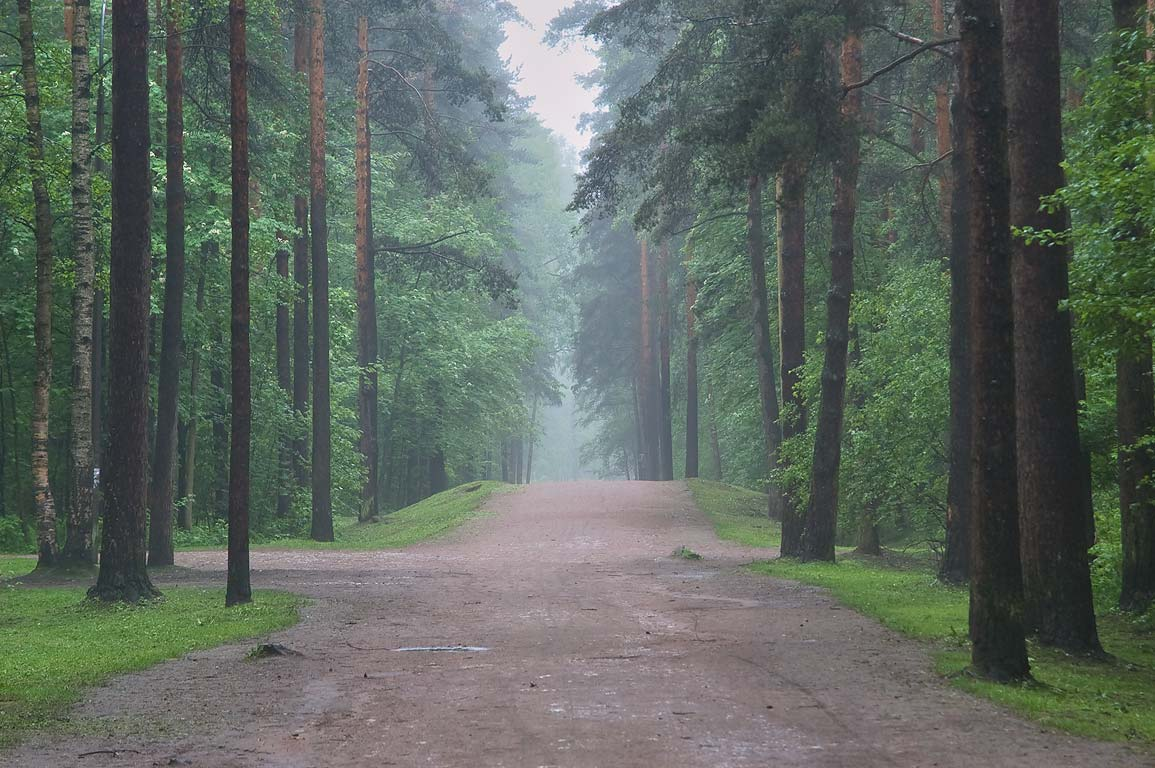 Pine tree alley in Sosnovka Park ending at Tikhoretsky Prospect. St.Petersburg, Russia