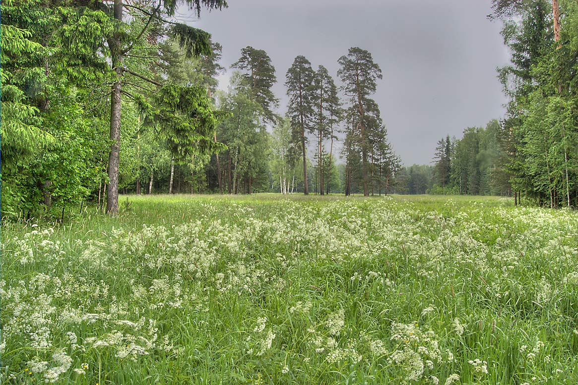 Meadow in area of Novaya Sylvia in Pavlovsk Park...a suburb of St.Petersburg, Russia