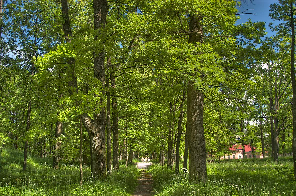 Alley of Upper Botanical Gardens in Gatchina Park...a suburb of St.Petersburg, Russia