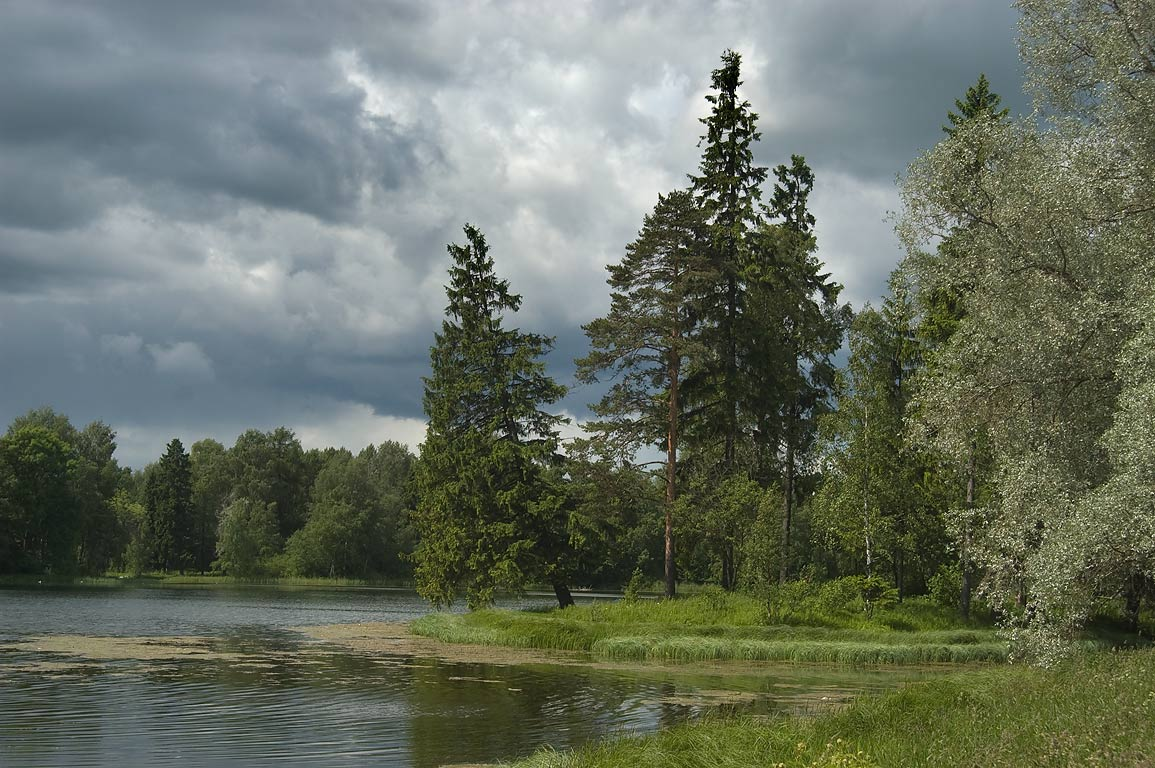 Fir Island near north shore of Beloe Lake in...a suburb of St.Petersburg, Russia