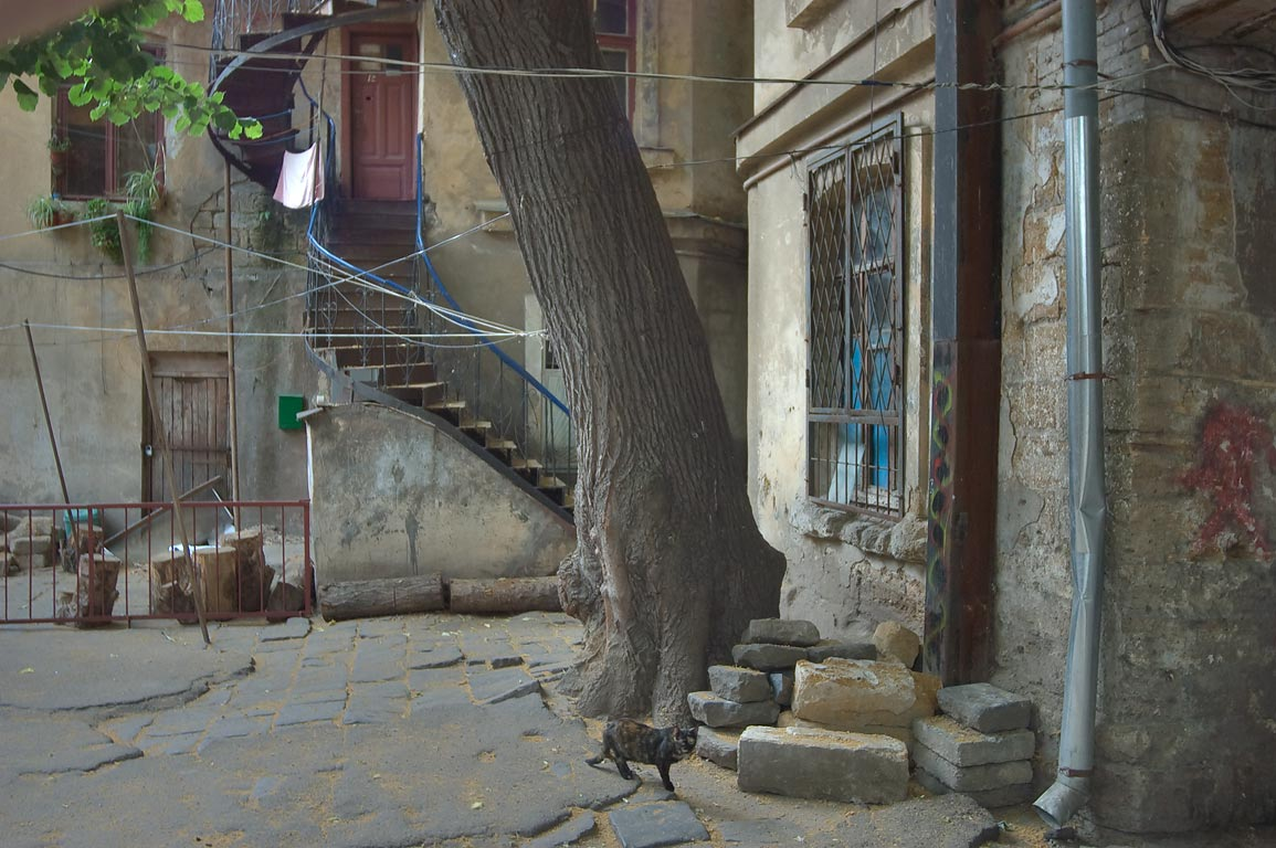 Old courtyard with a tree and a cat on Evreyskaya St. near Kanatnaya St.. Odessa, Ukraine