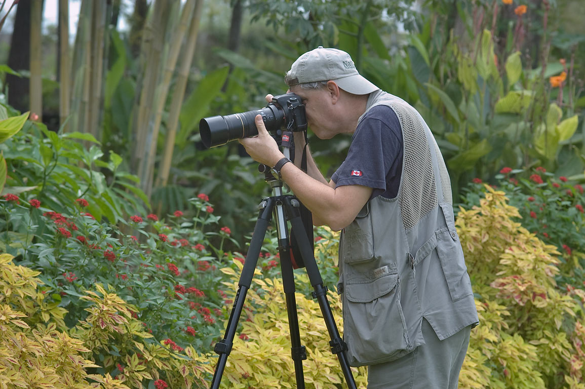 Photographer taking pictures of butterflies in...Gardens. Humble (Houston area), Texas