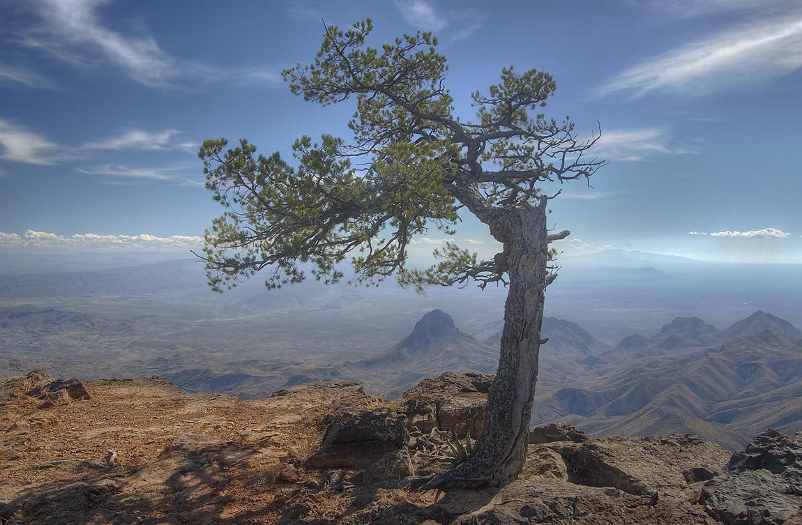 Most photographed spot with a pine tree on South Rim. Big Bend National Park