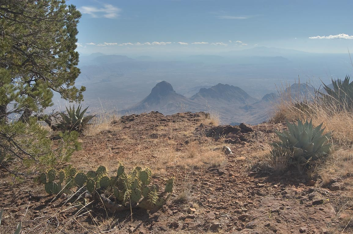 Cacti and agaves on South Rim. Big Bend National Park