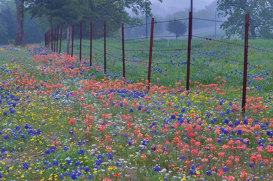 Wildflowers on a roadside of Rd. 2562 near...217, south from Roans Prairie. Texas