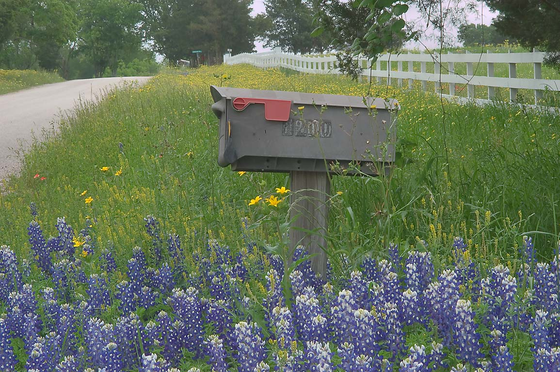 Mailbox in bluebonnets at 1200 Christmas Rd. east from Gay Hill. Texas