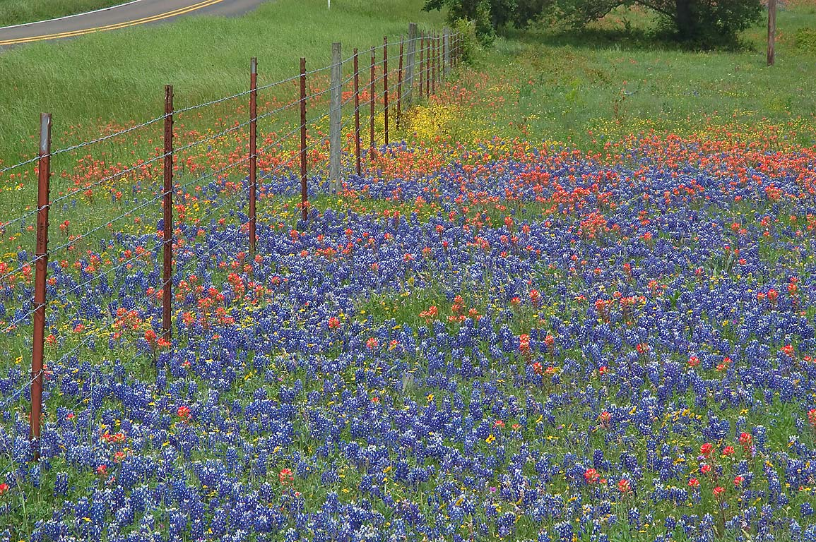 Wildflowers at Rd. 390, a corner of Hoddeville School Rd. west from Gay Hill. Texas