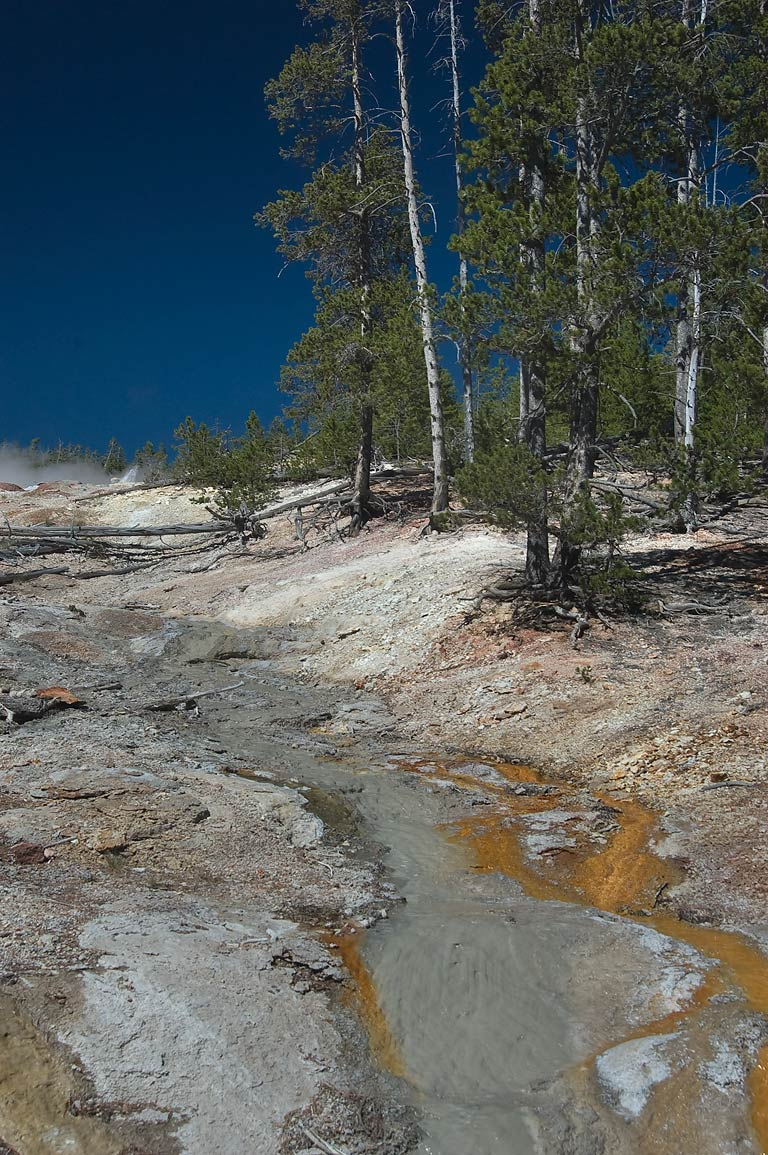 Creek in area of Norris Geyser Basin . Yellowstone Park, Wyoming