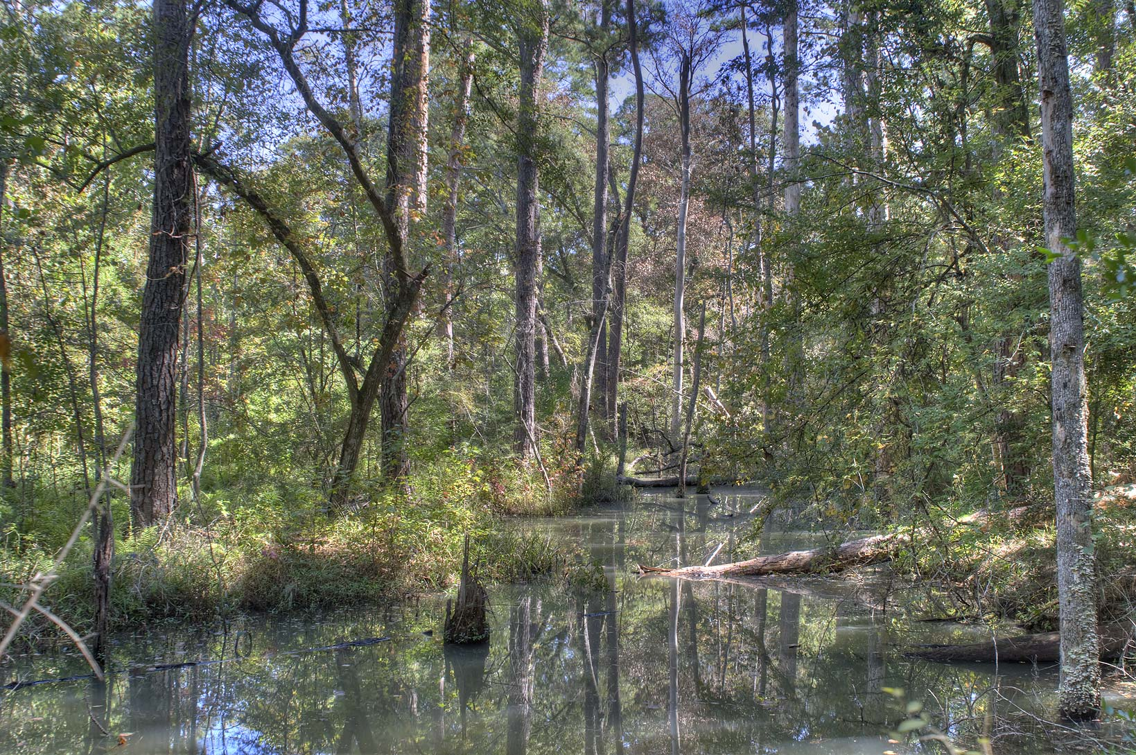 Alligator Branch near Huntsville State Park from Lone Star Trail. Texas