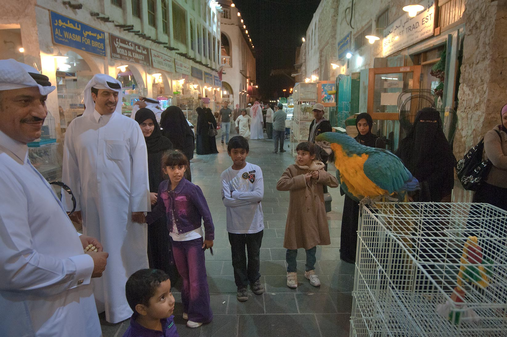 Parrot show in Souq Waqif (Old Market). Doha, Qatar