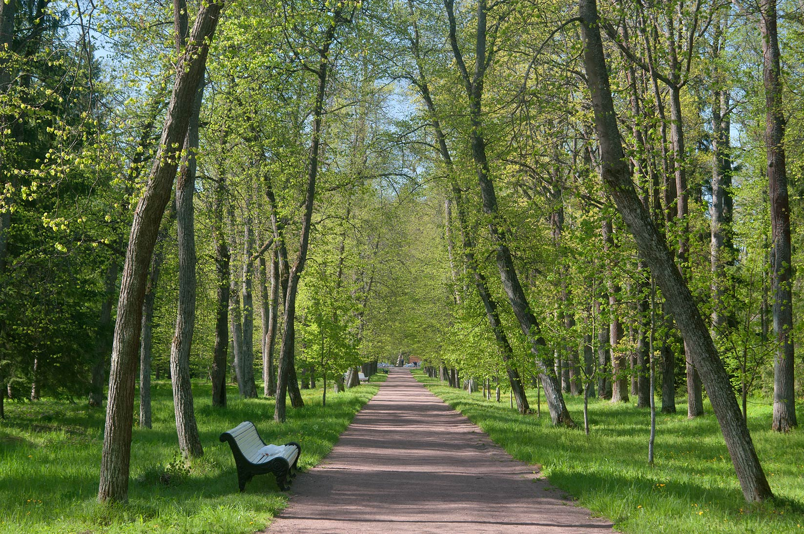 Straight alley in a park of Lomonosov (Oranienbaum). West from St.Petersburg, Russia