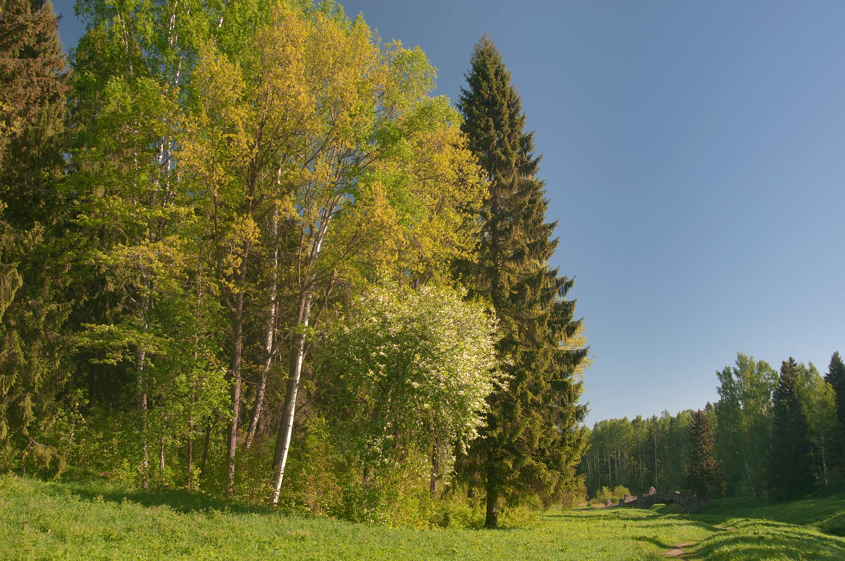 Meadows along Slavyanka River in Pavlovsk Park, south from St.Petersburg. Russia