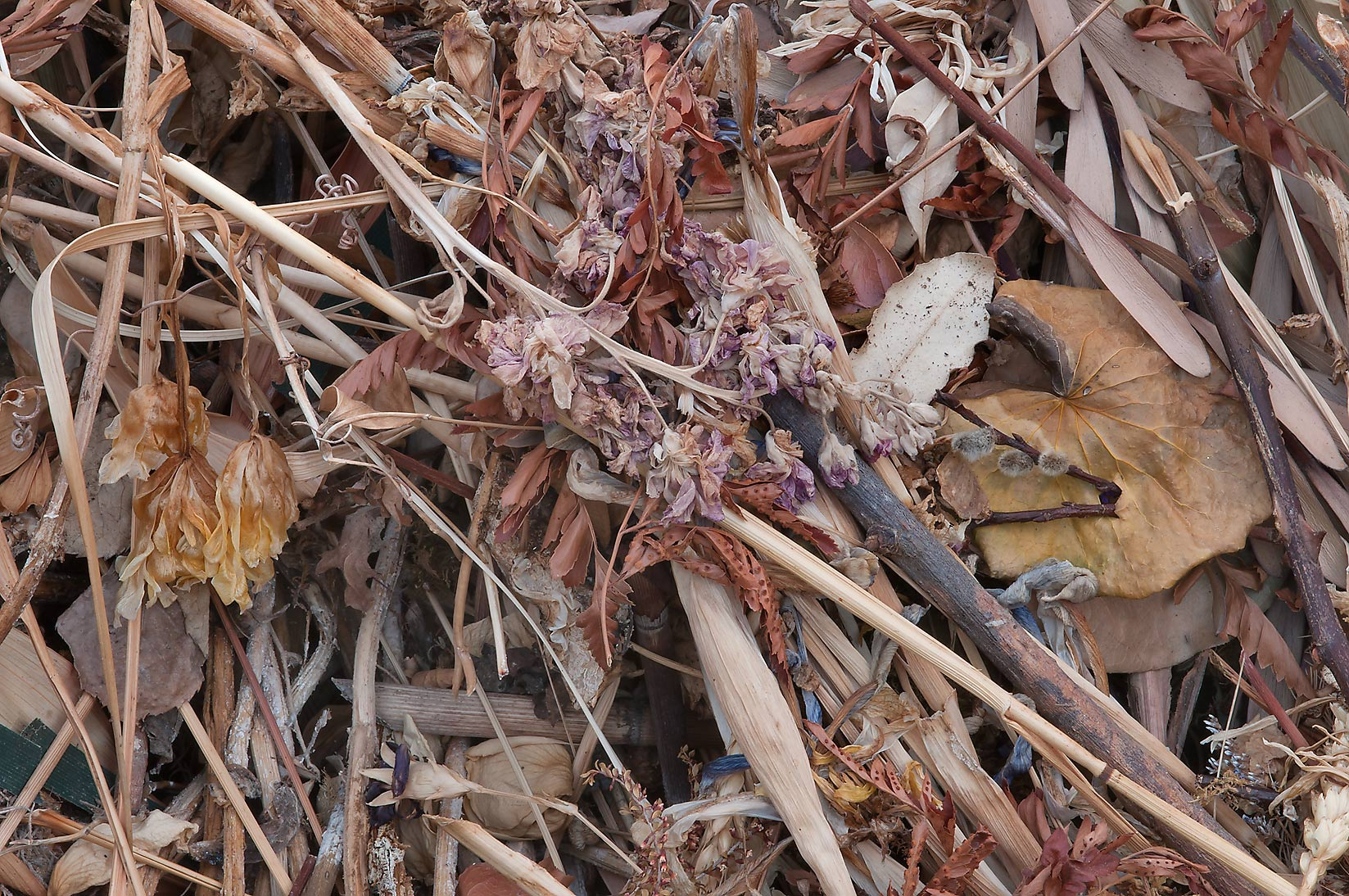Dry flowers in a compost pile in TAMU Holistic...M University. College Station, Texas