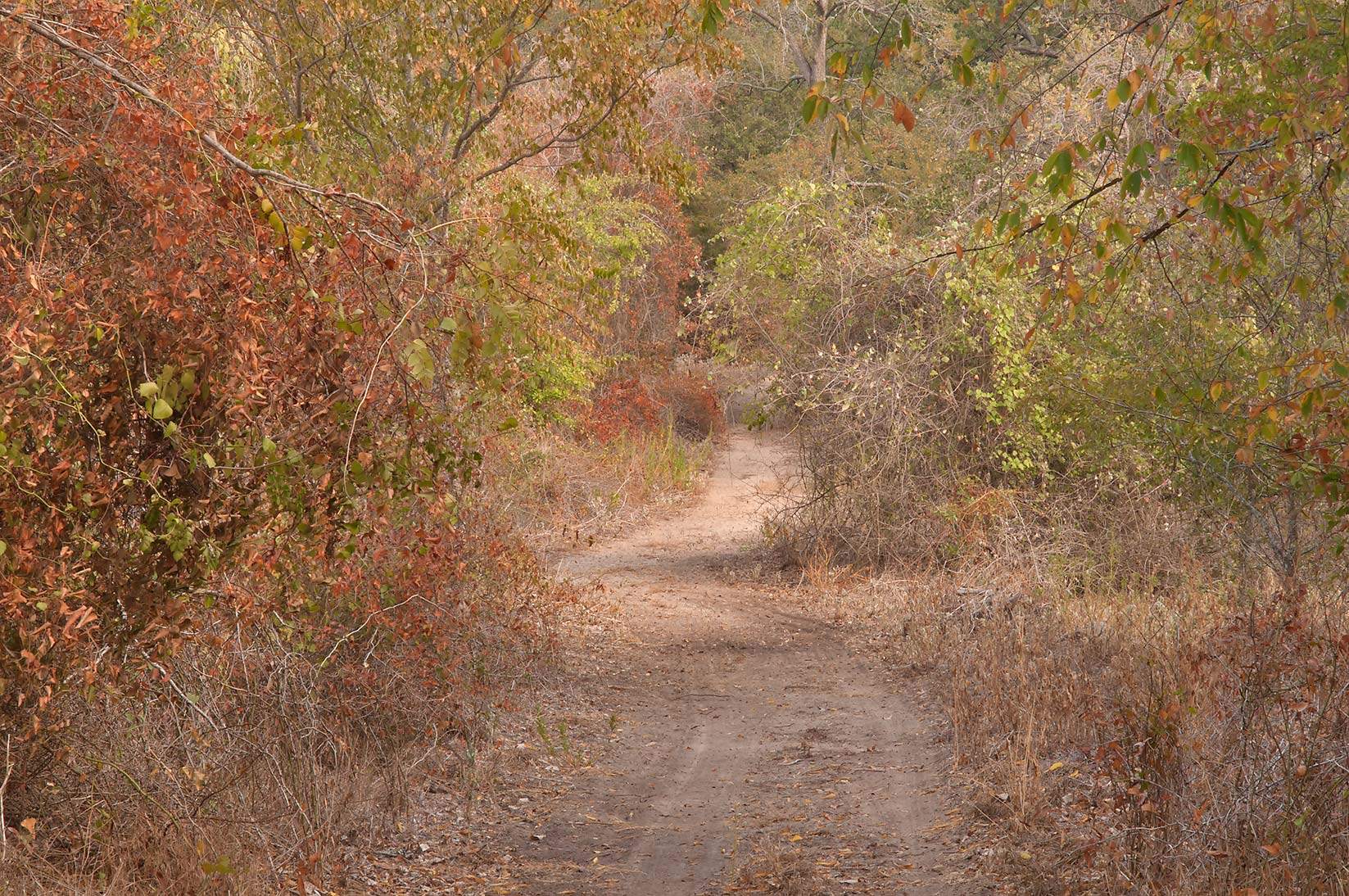 A trail through brown vegetation in Birch Creek Park near Somerville Lake. Texas