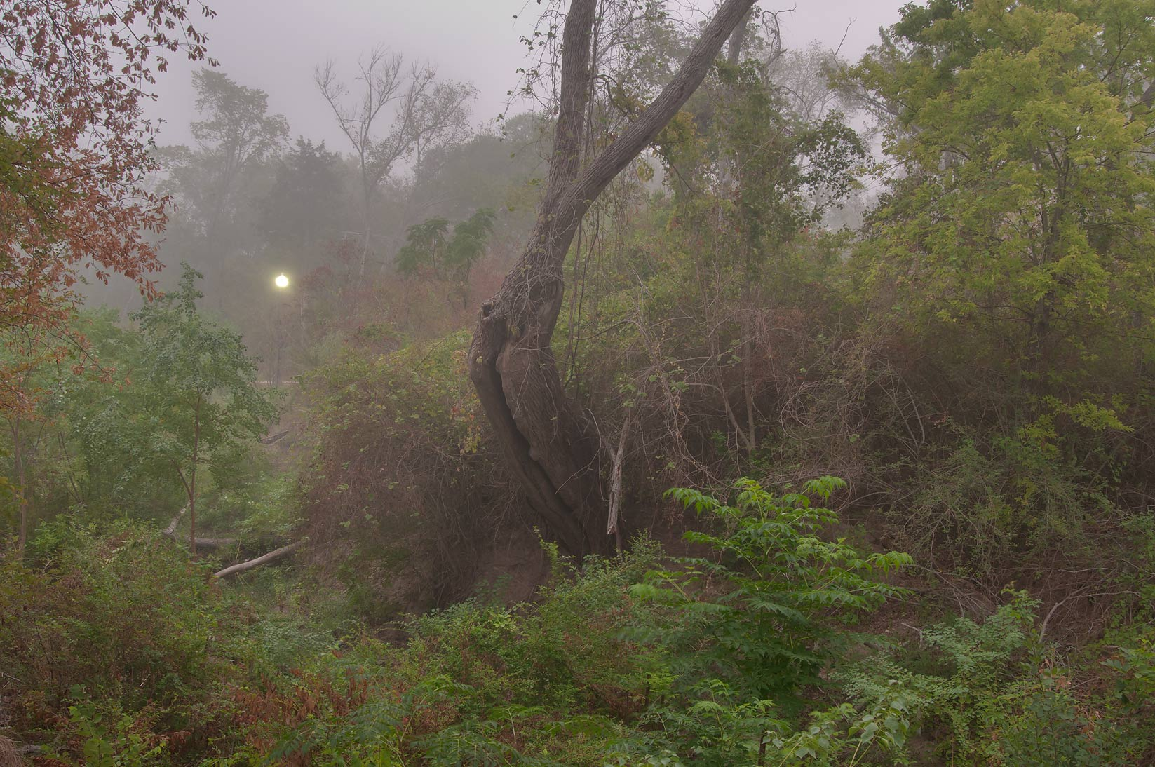 Canyon of Wolf Pen Creek Park in fog. College Station, Texas