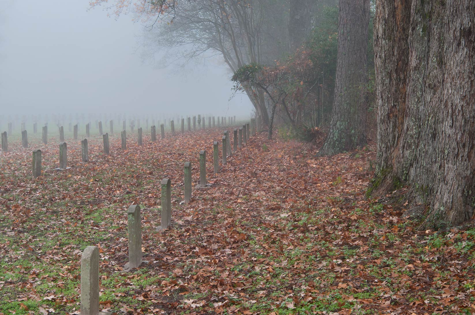 Back rows of TDCJ Captain Joe Byrd (Peckerwood Hill) Cemetery in fog. Huntsville, Texas