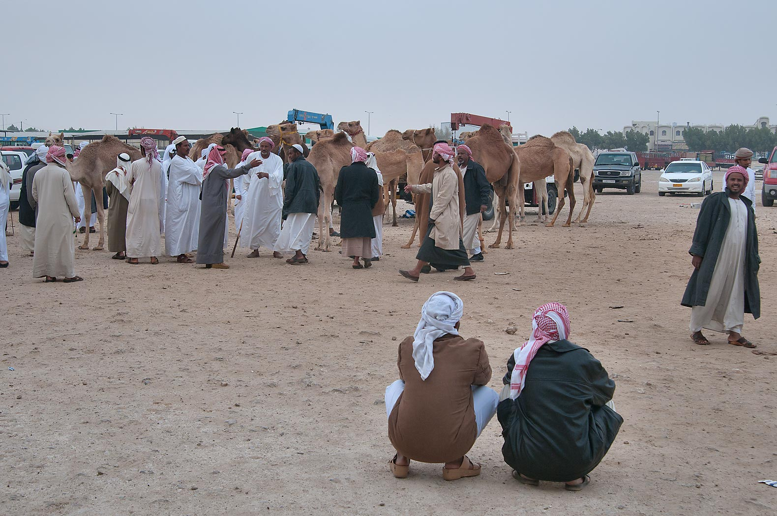 Gathering in Camel Market (Souq), racing section. Doha, Qatar